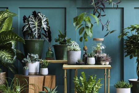 Des plantes sans entretien pour ceux qui n'ont pas la main verte !