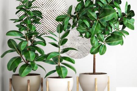 Déco : trouver des plantes adaptées à chaque pièce de la maison